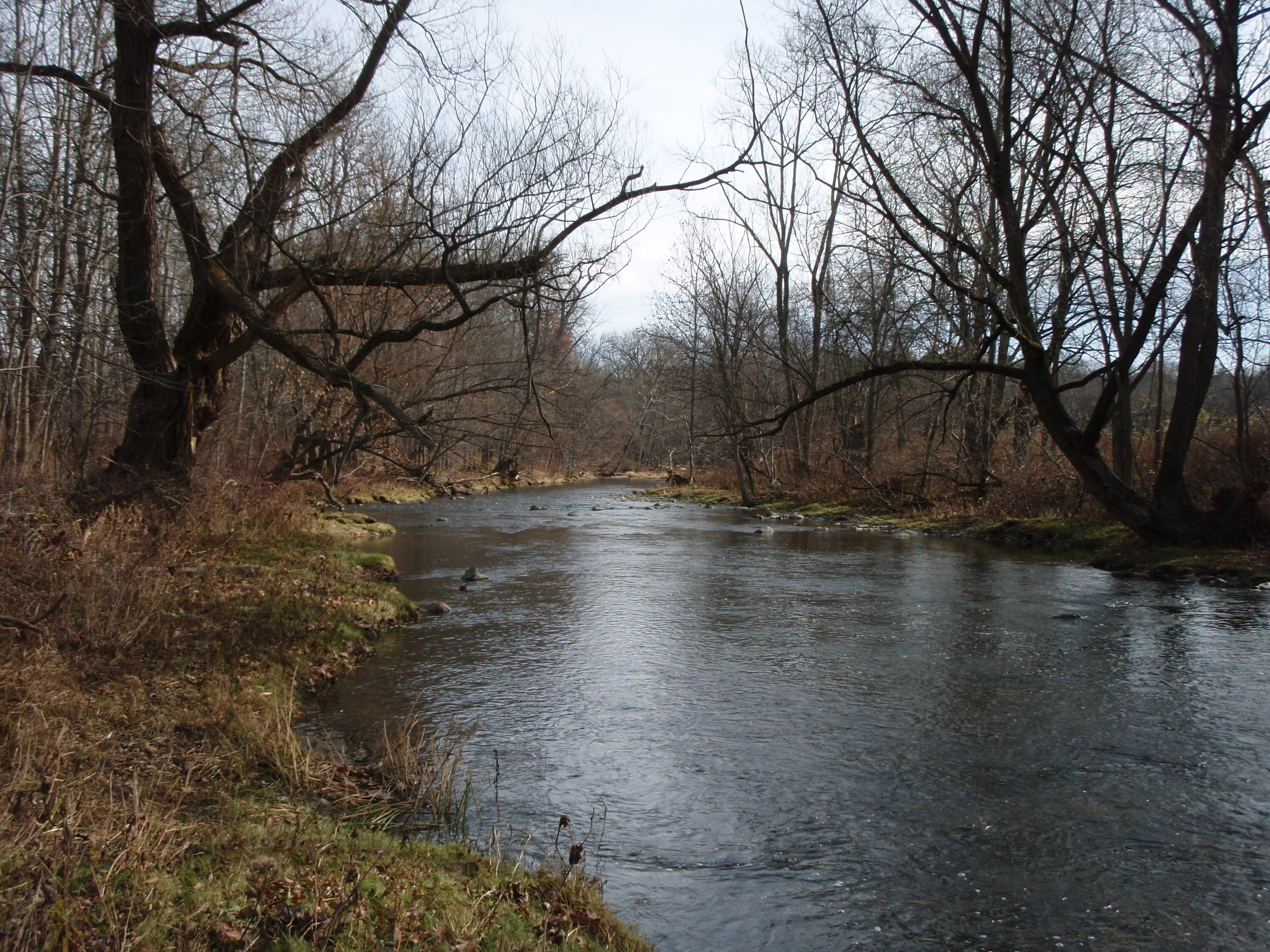 Floodplain forest along Normanskill Creek