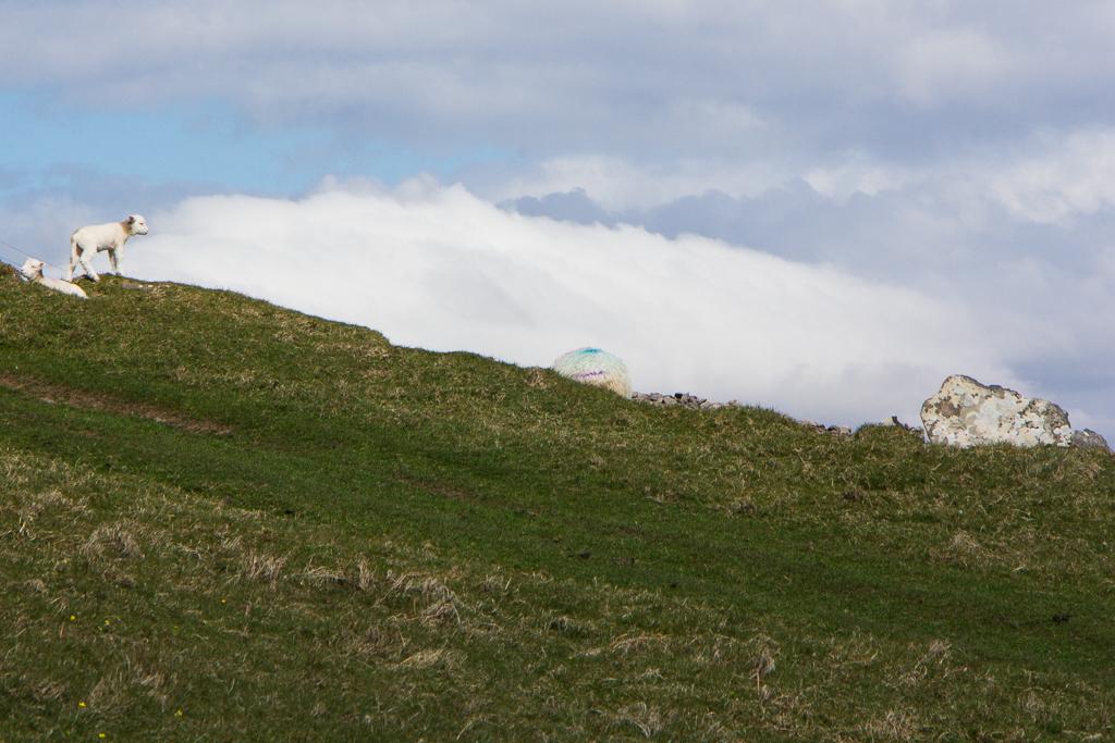 Rainbow colored sheep on the horizon
