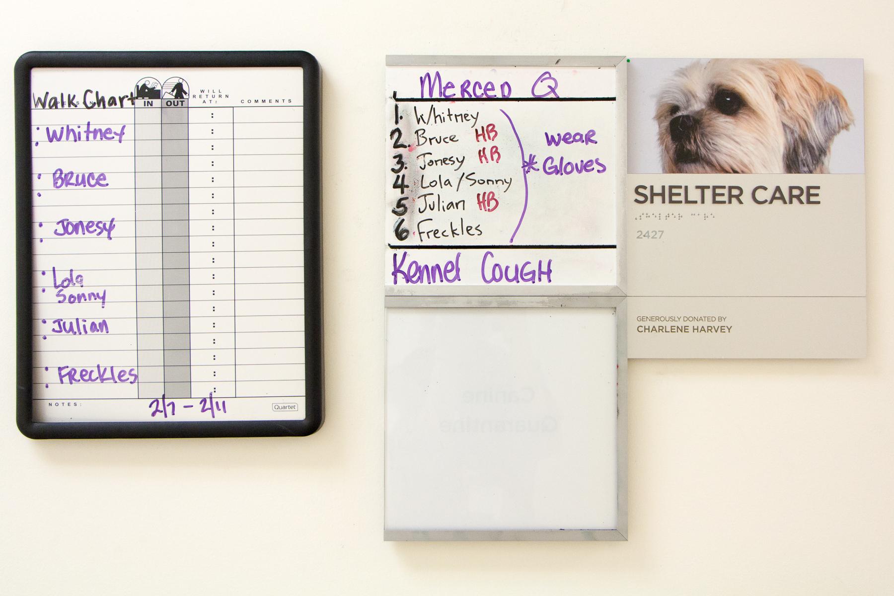 SF SPCA - Dog Volunteer Community