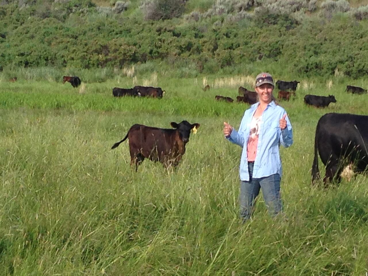 The cattle were quite comfortable with our continued appearances.