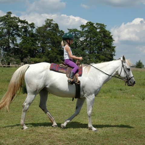 A photo of Ruby, the mare I learned to ride on when I was still a tiny person.