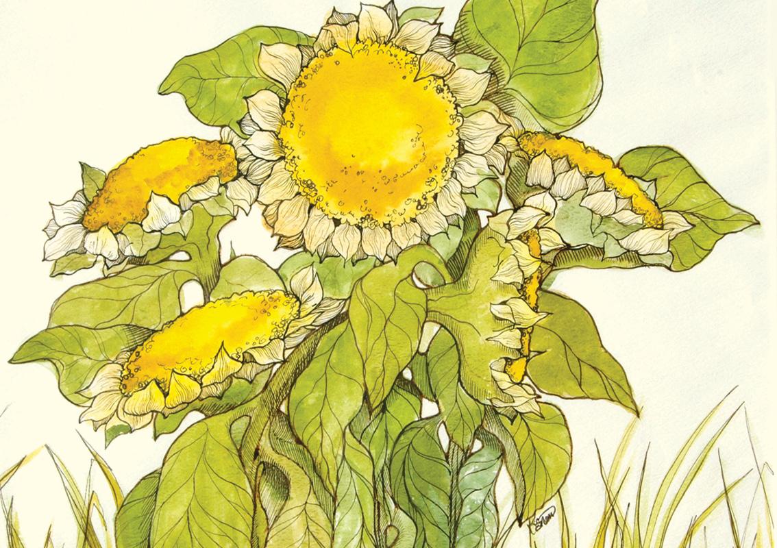 NO04 Summer Flowers