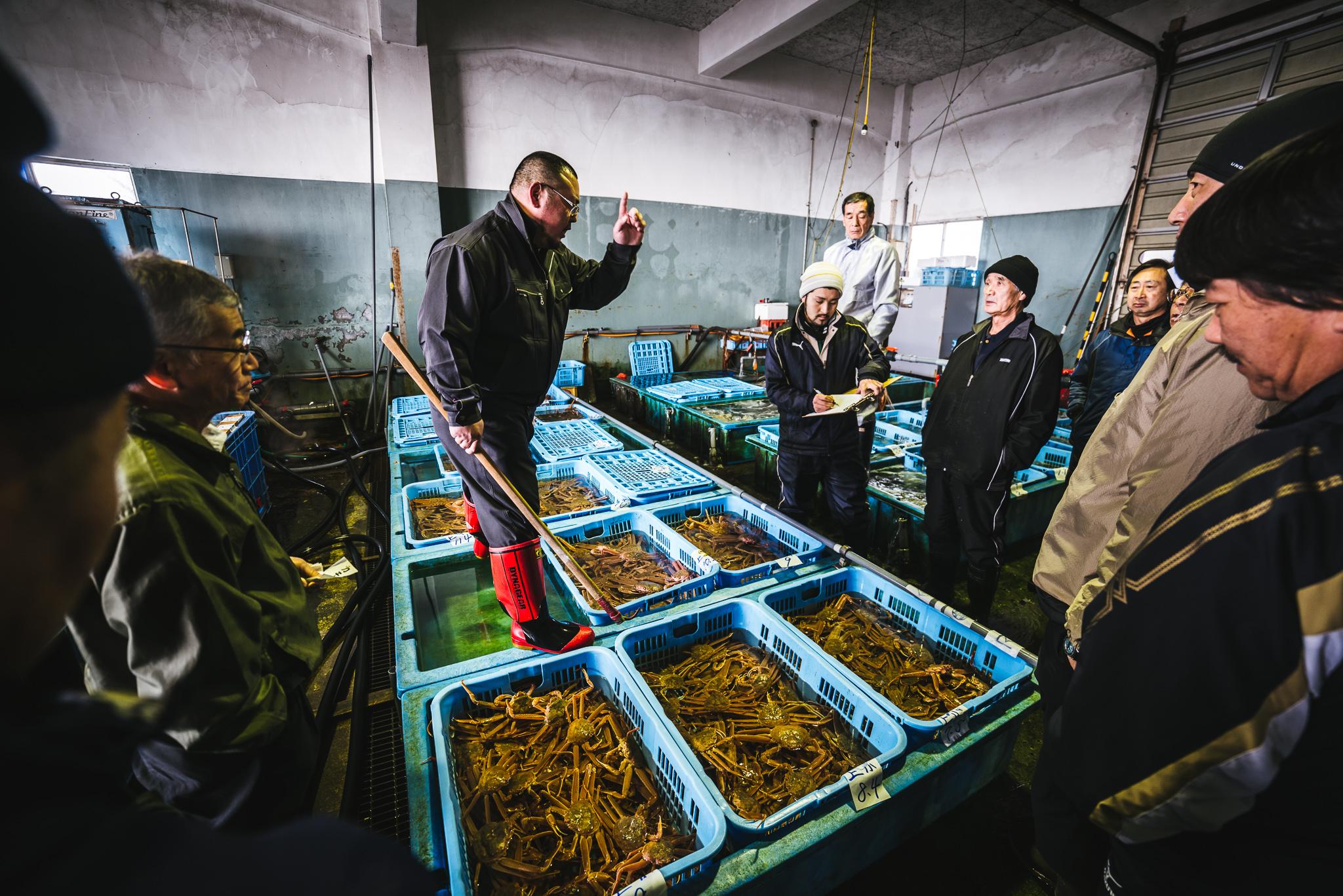 fish auction Hokkaido
