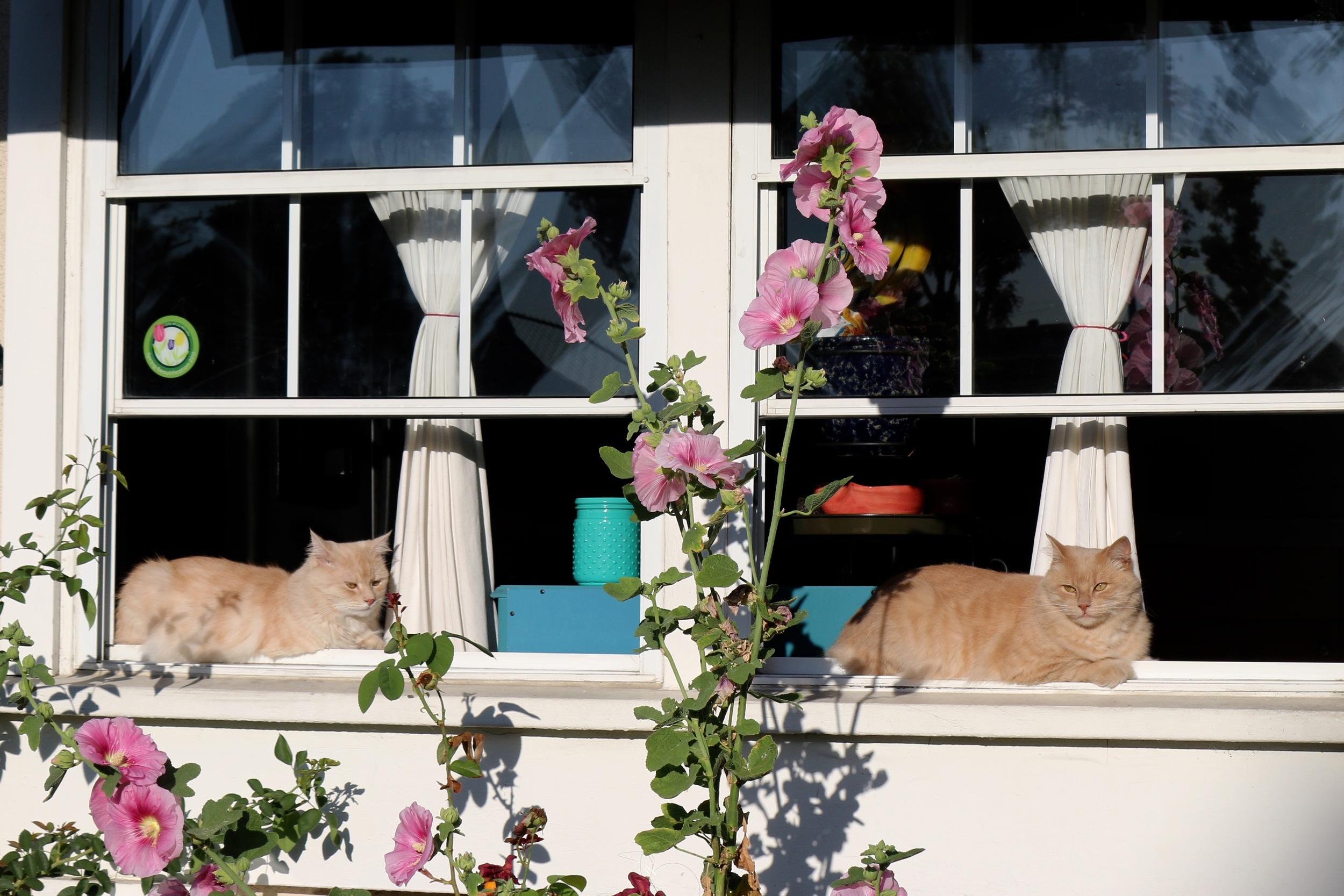 Simon and Garfunkel soaking in the morning light.