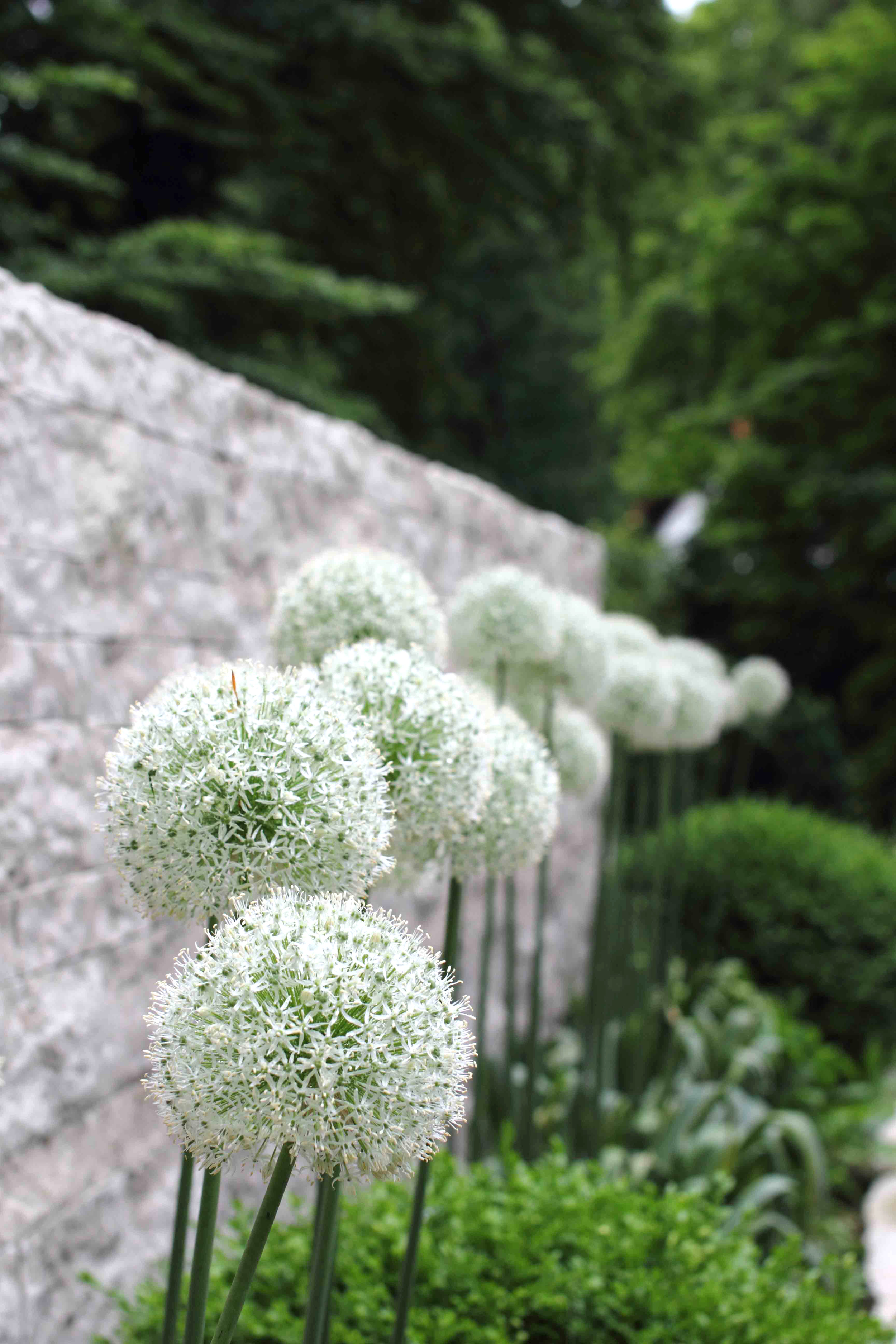 privatgarten-01_f.jpg