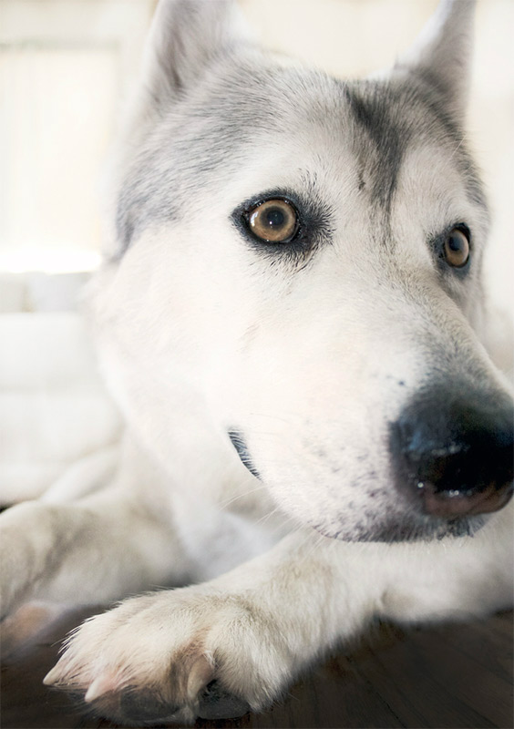 photographer-dog3.jpg