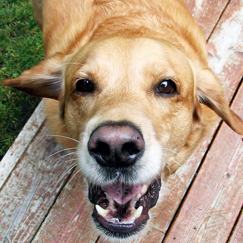 bark-williams-santa-monica-teeth-cleaning.jpg