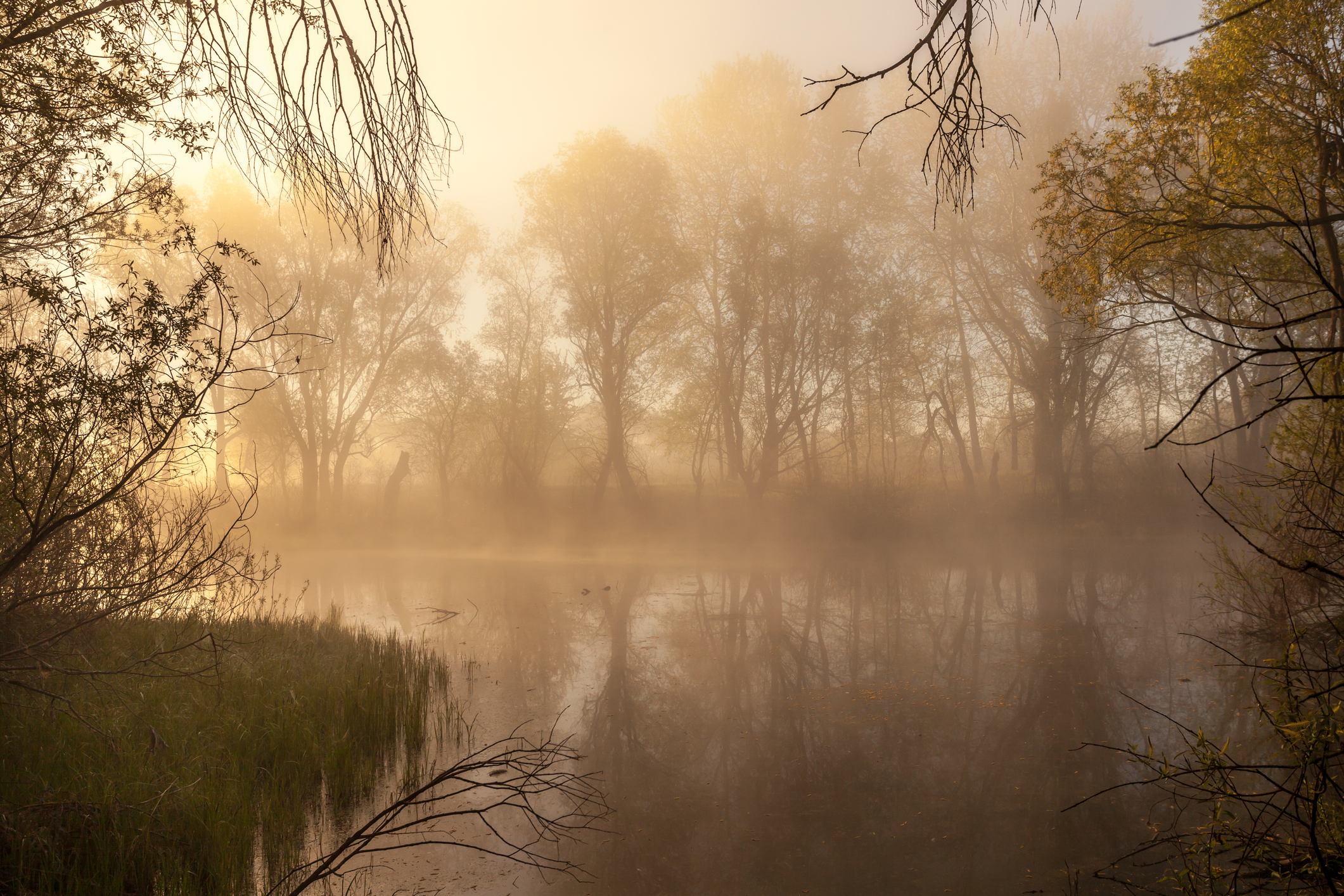 ©  Shico300  |  Dreamstime.com  -  Serene Misty Morning On A Lakeside Photo