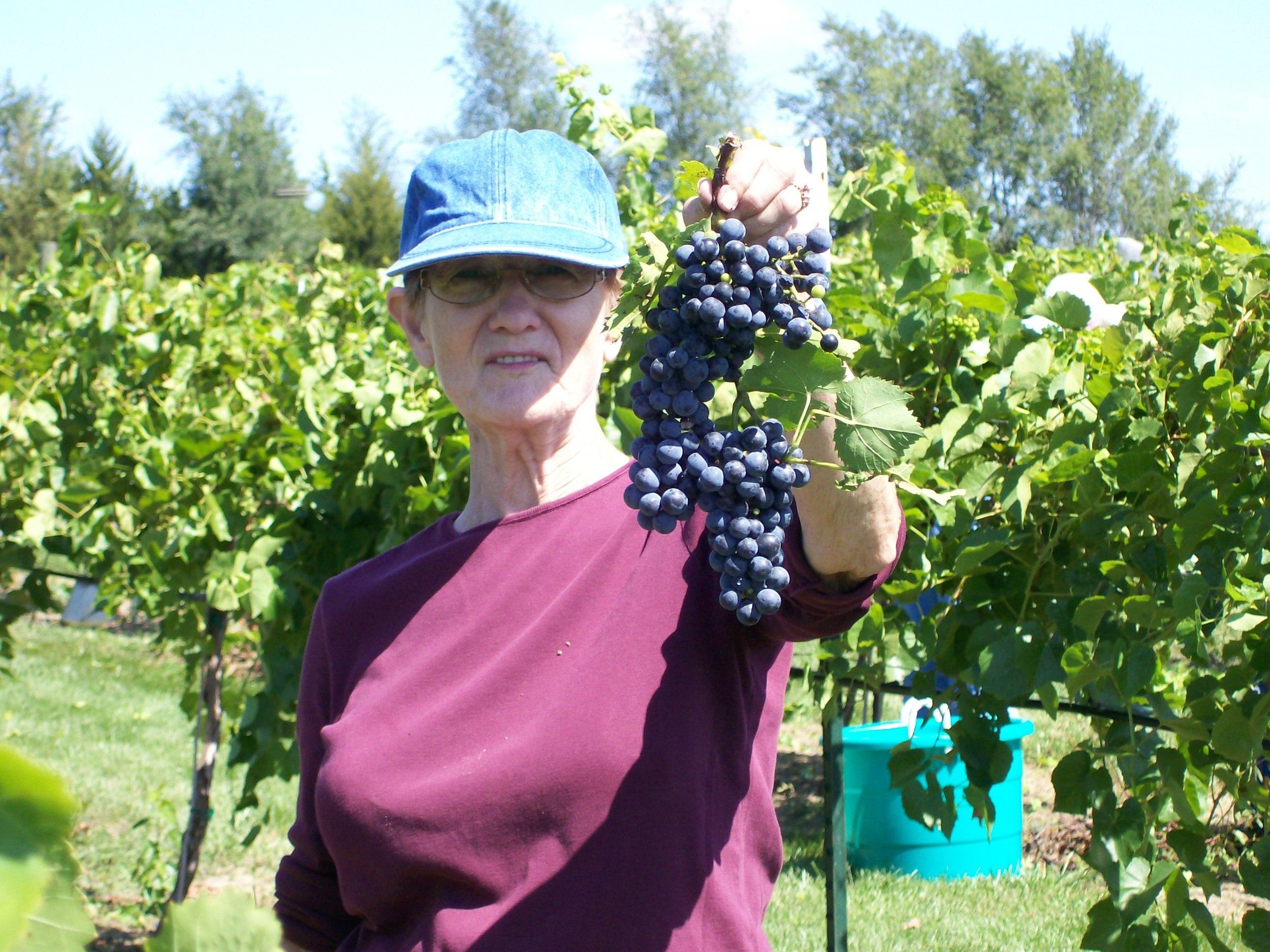 First harvest September 8 2011 009.JPG