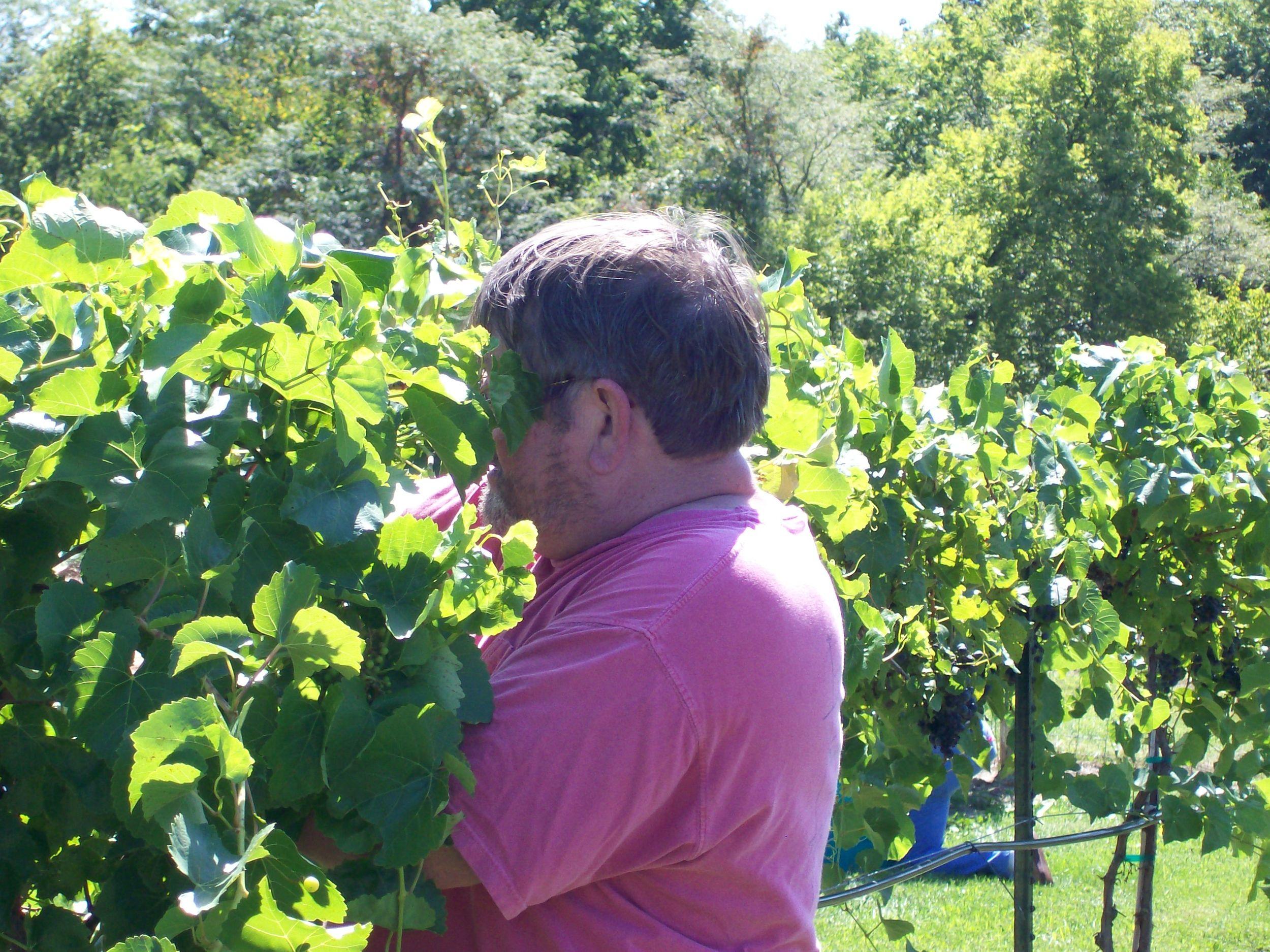 First harvest September 8 2011 016.JPG