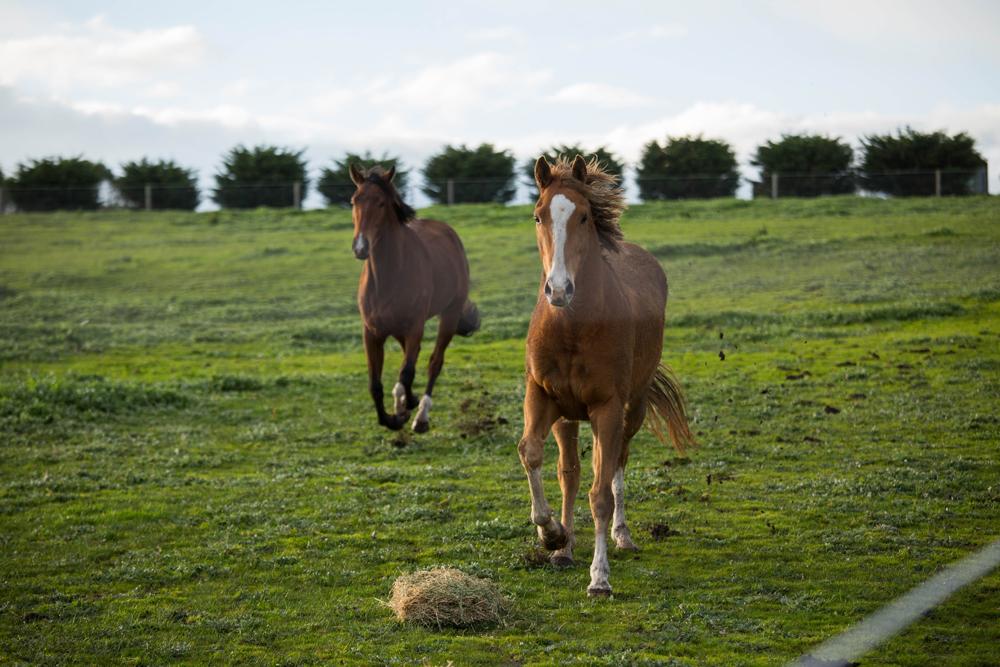 the-gallop-1a-copy.jpg