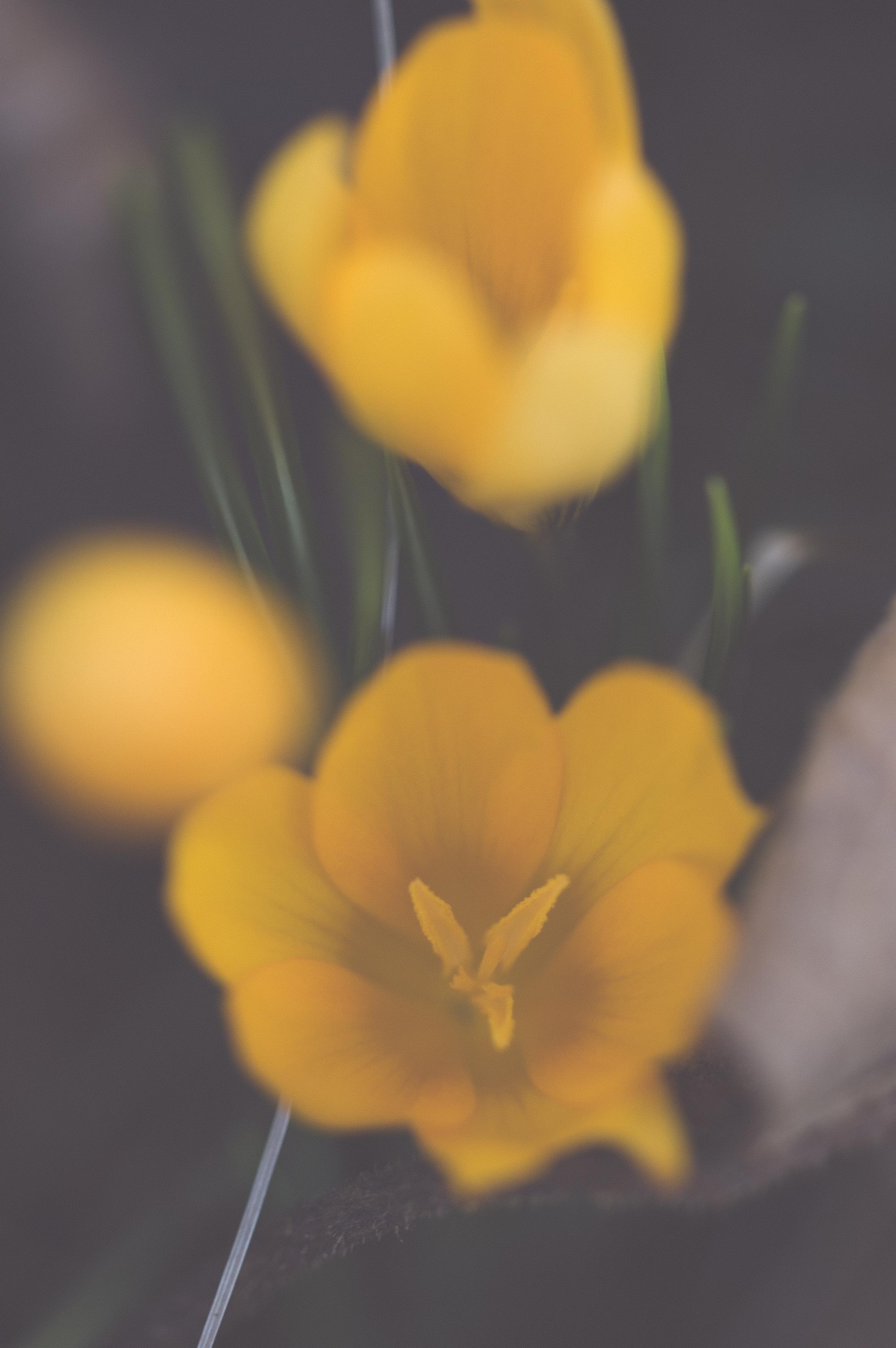 xrayflower.jpg