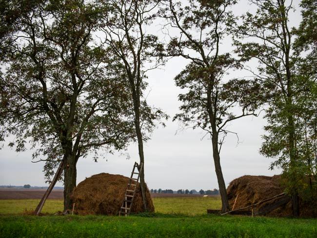 Hay harvest, Western Ukraine, September 2011