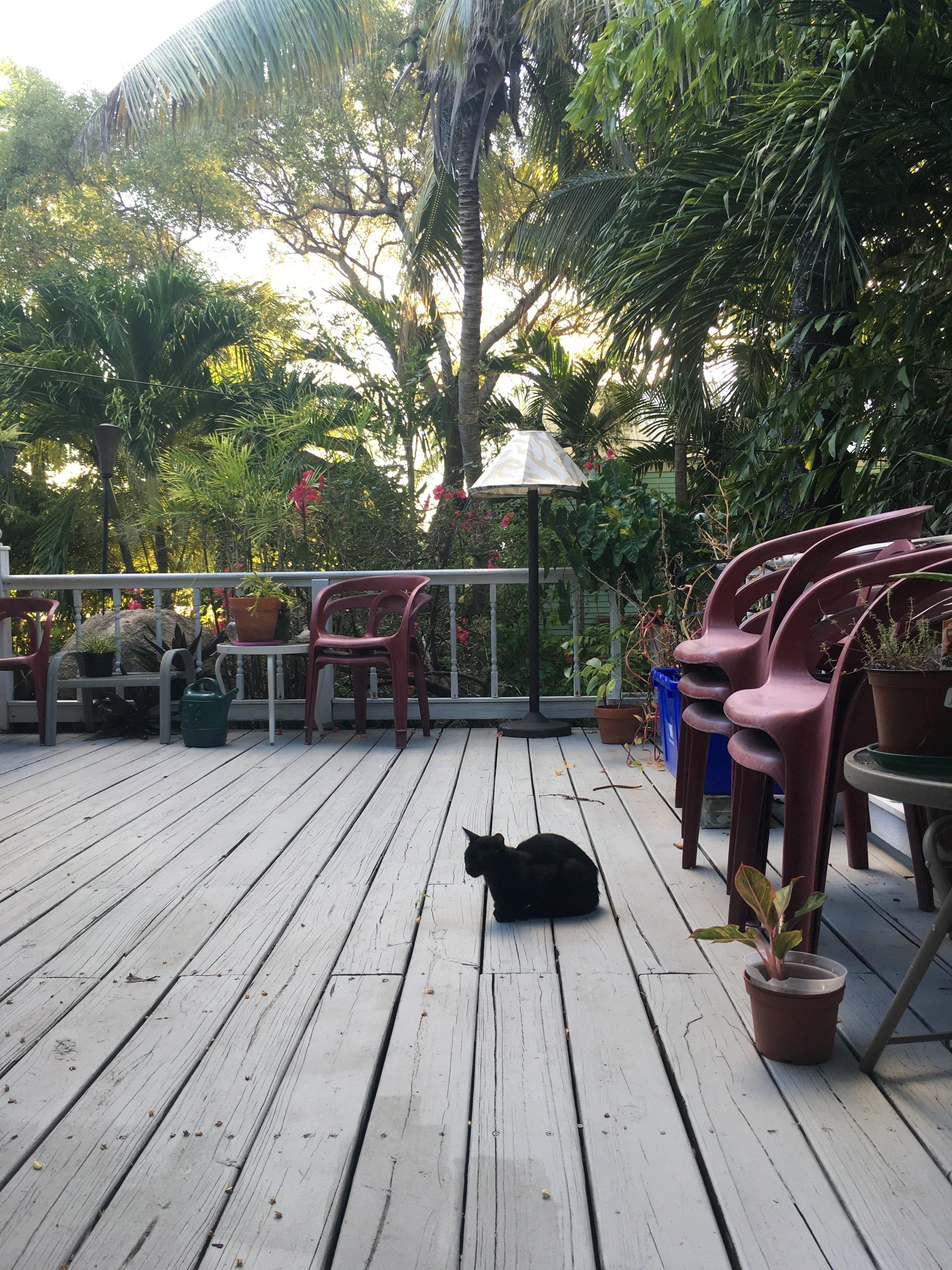 Black cat on my deck