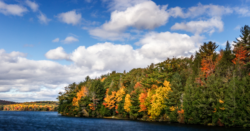 Autumn's Final Blush