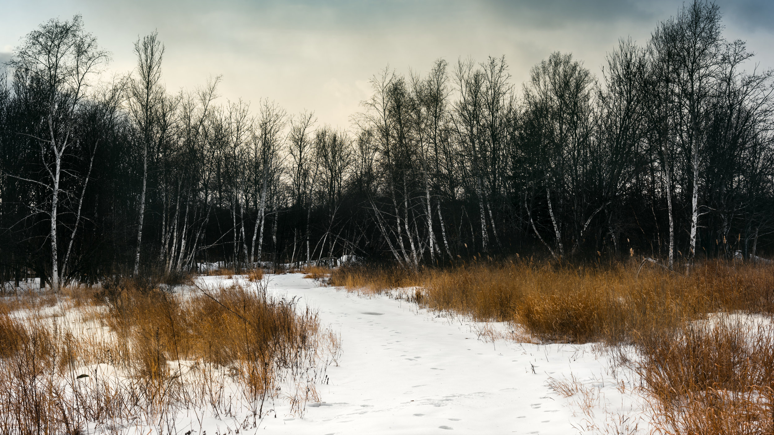 Walk in the Winter Woods