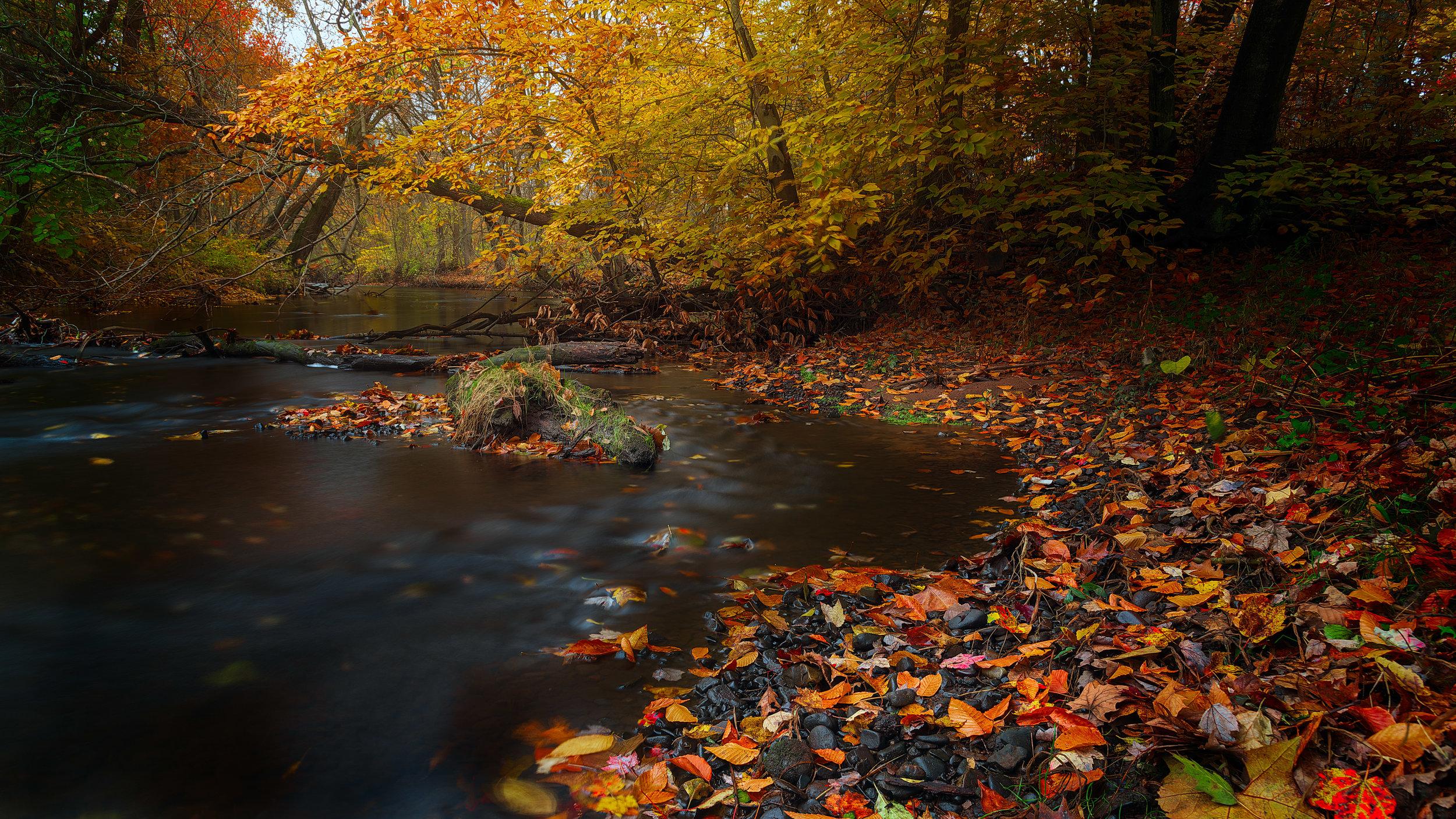 Autumn Journey No. 5