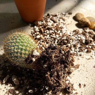 Plant Postures -