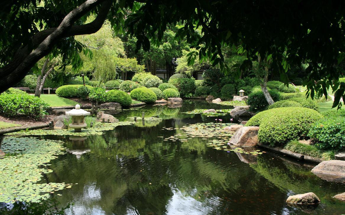 Mount-Coot-tha-Botanical-Gardens