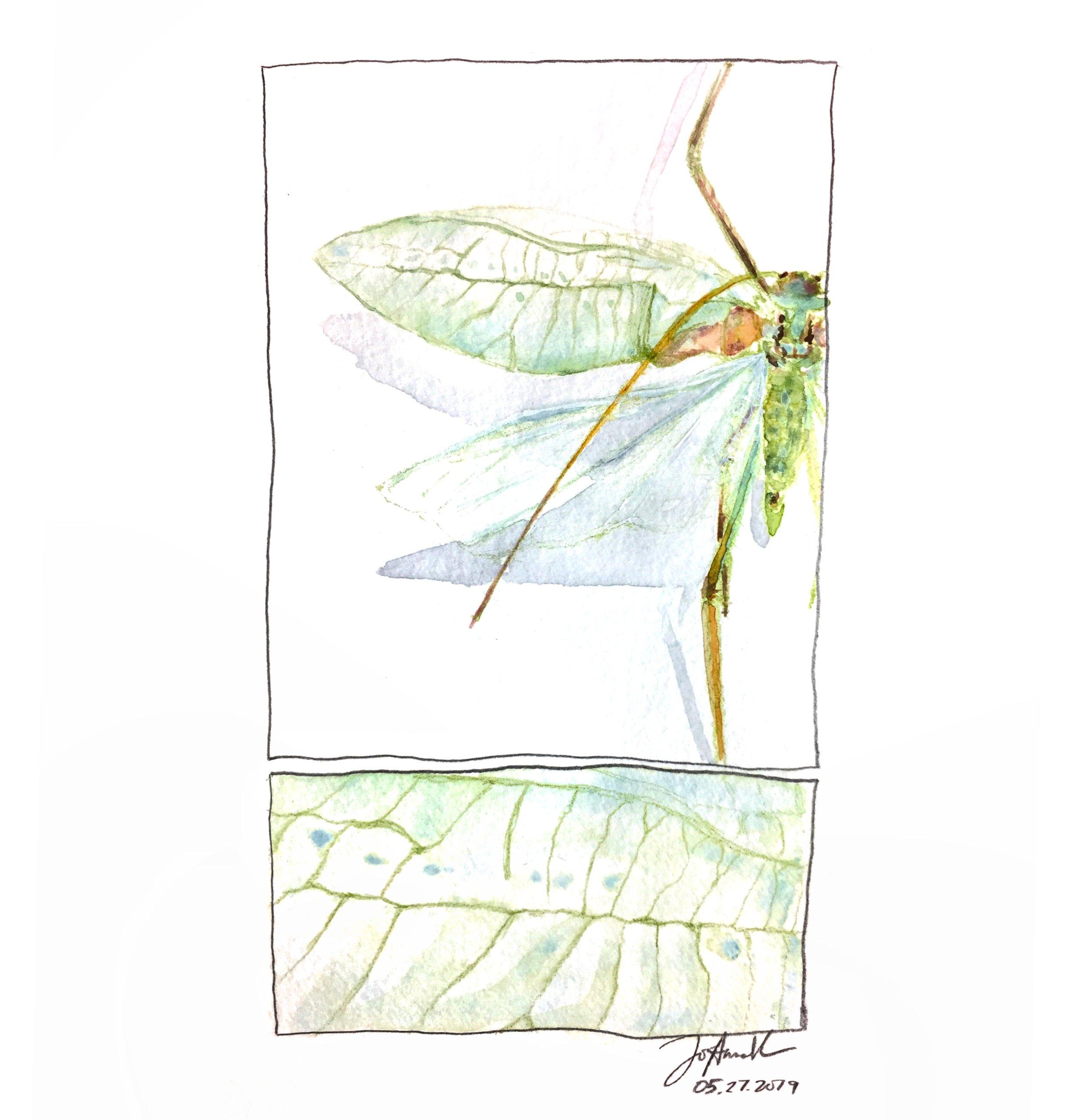 a specimen at the insectarium