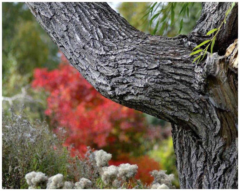 tree-red-mdow.jpg