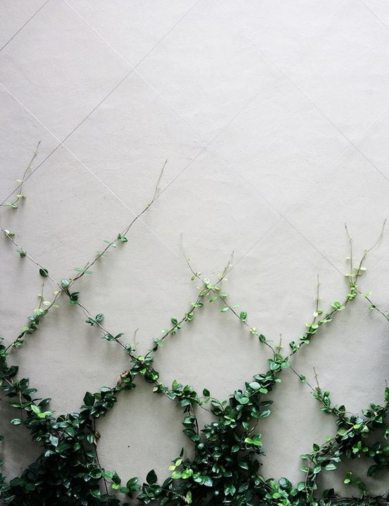 Create your own art work using plants