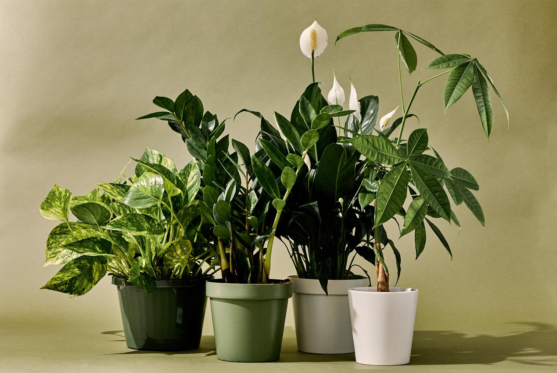 10-Best-Indoor-Plants-Gear-Patrol-lead-full.jpg