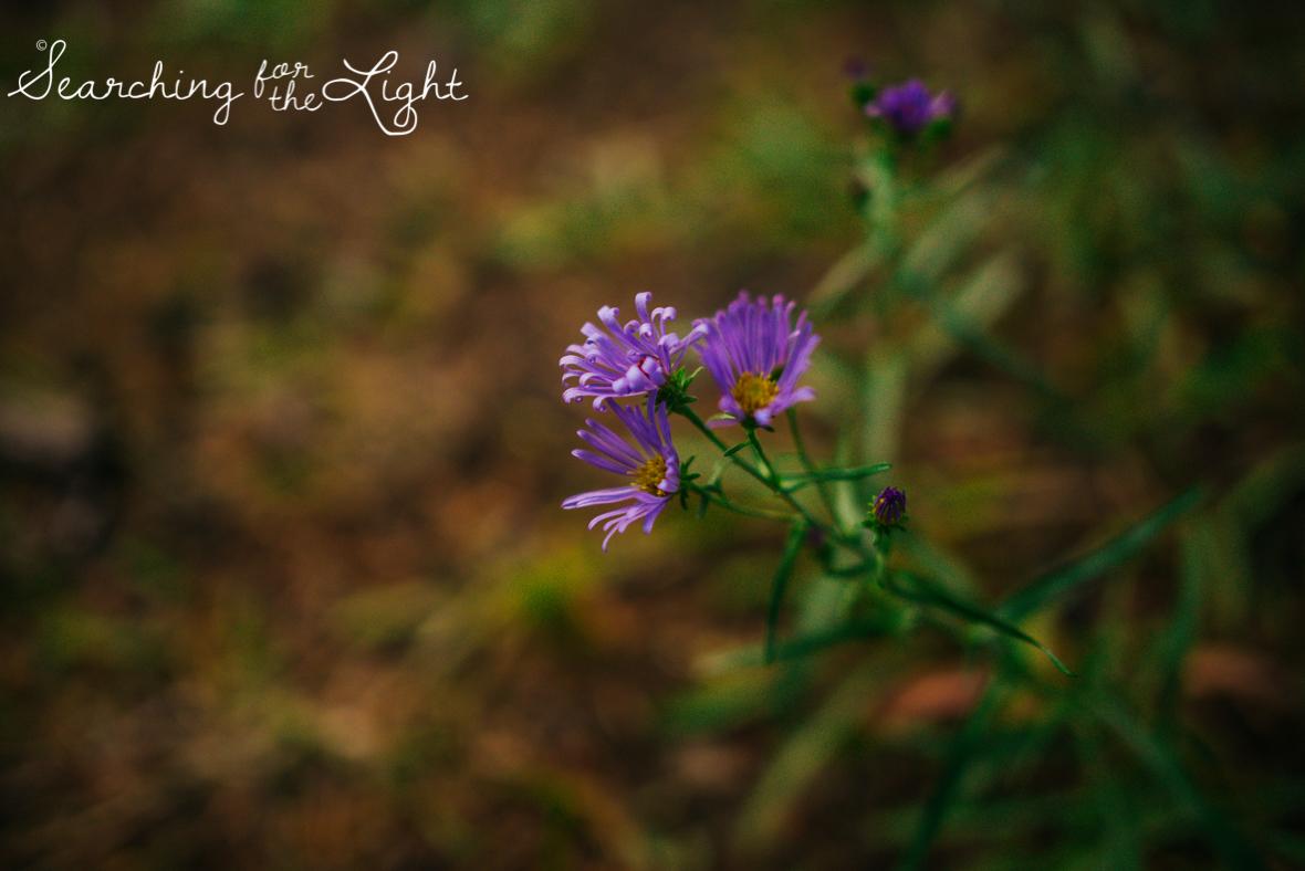 12lake-engagement-photos-lake-dillon-colorado-wedding-photos_034.jpg