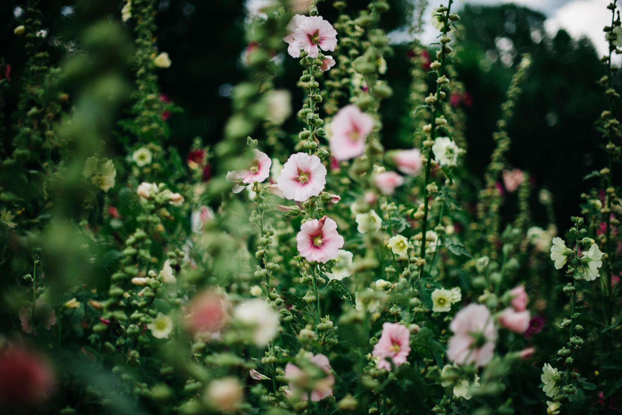 86elopement-photographer-colorado-lyons-farmette-wedding-amy&ben-2194.jpg