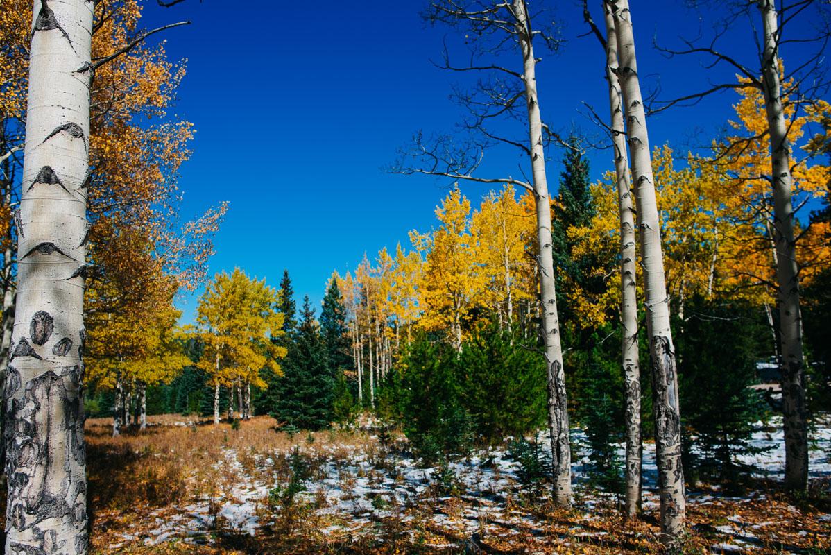 Denver Colorado Yoga Photography | {Yoga Teacher | Denver, Colorado Yogal Photographer}