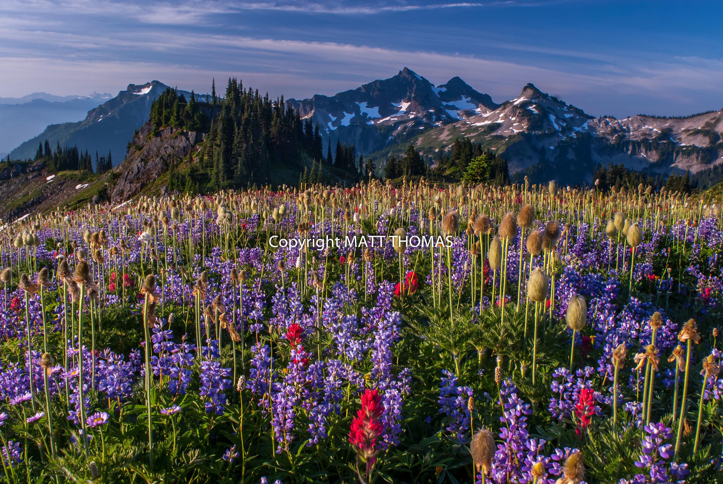 Wildflowers Tatoosh Range