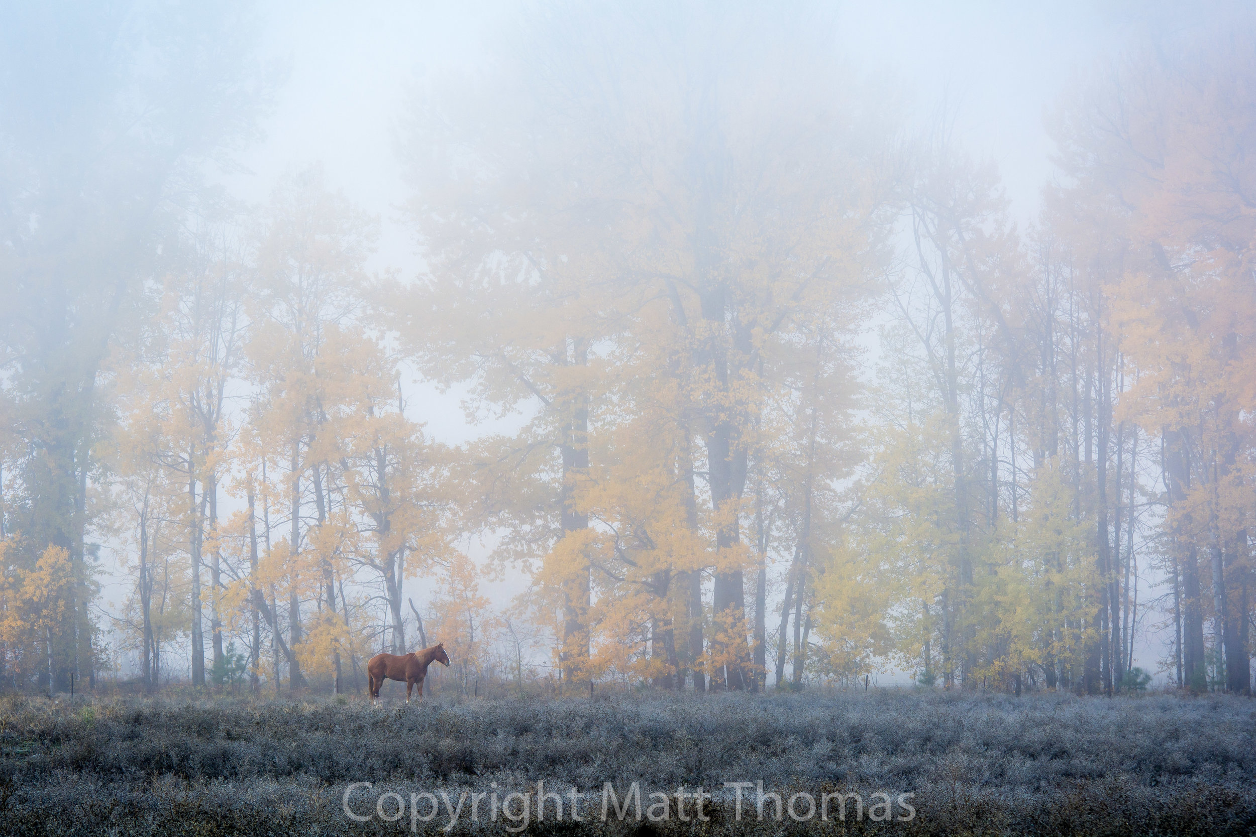 Misty Horse -1