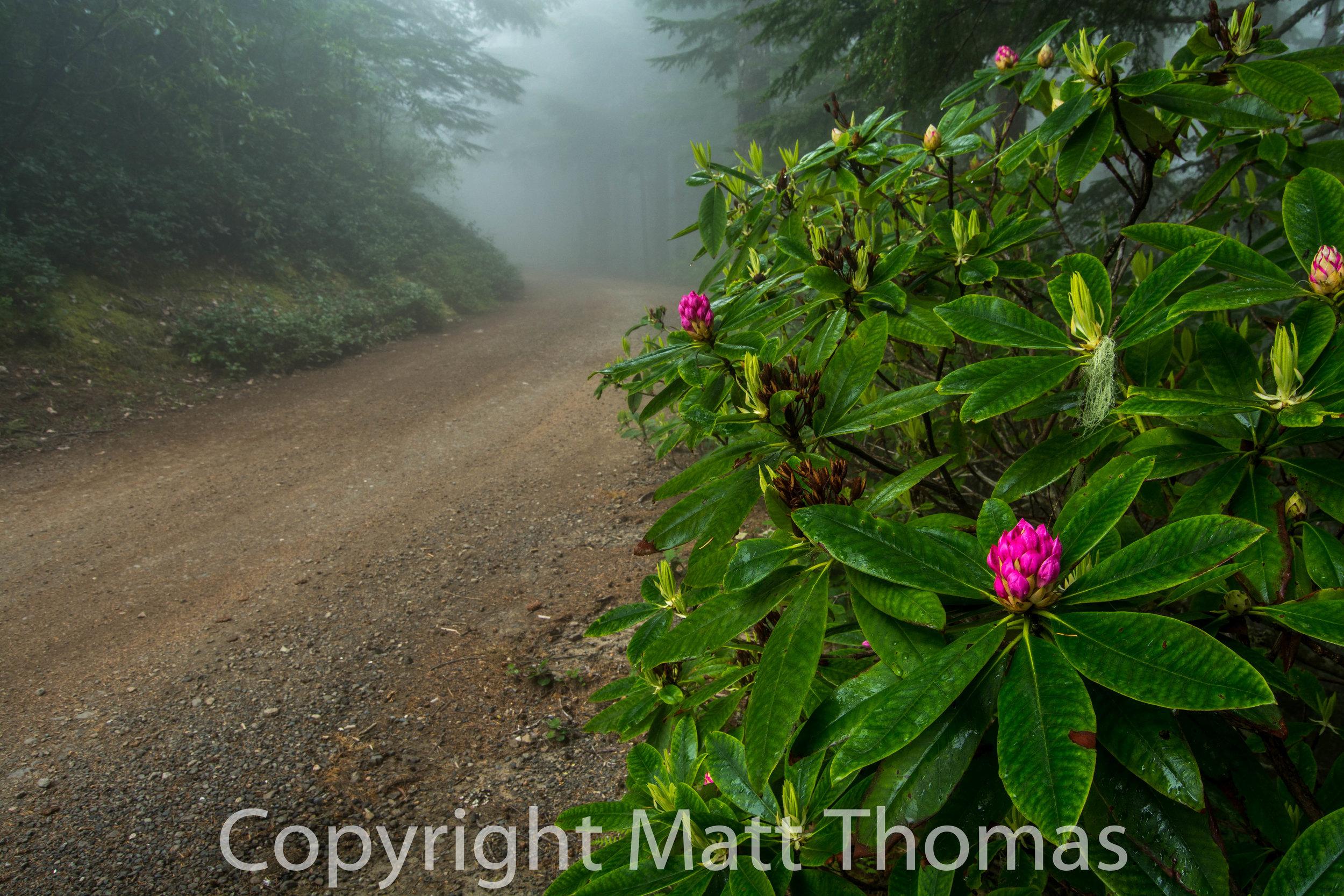 Roadodendron