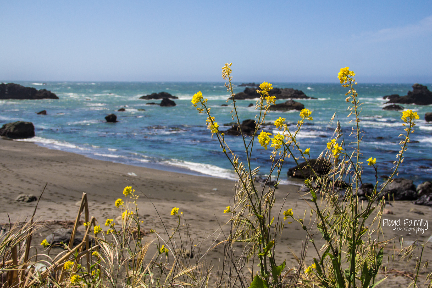 tidal pools with he kids   Placerville-Children-Photographer