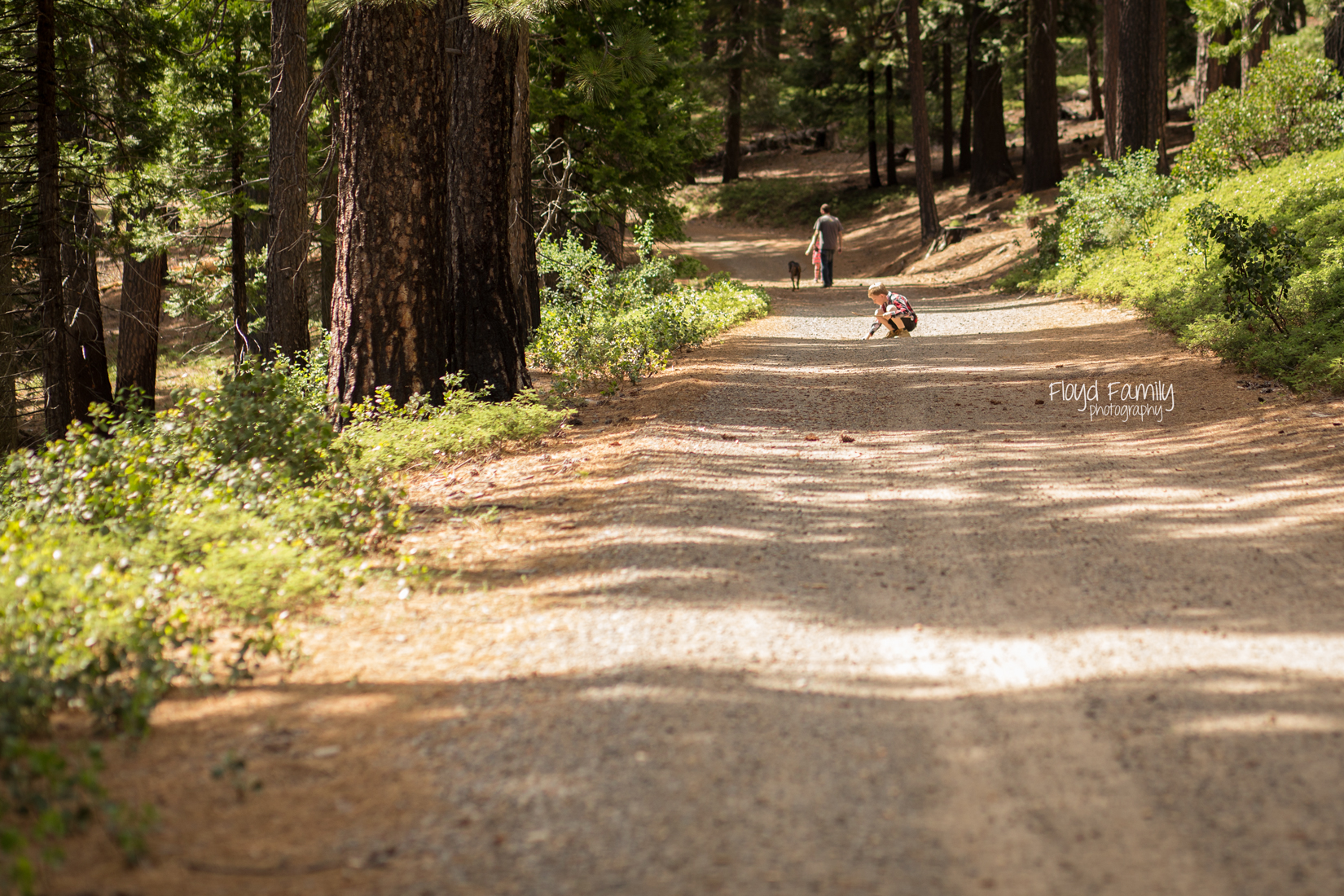 family walking ahead on hiking trail | Placerville-Family-Photos