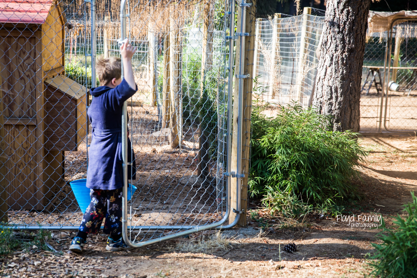 boy opening gate to chicken coop |  Placerville Children Documentary Photographs