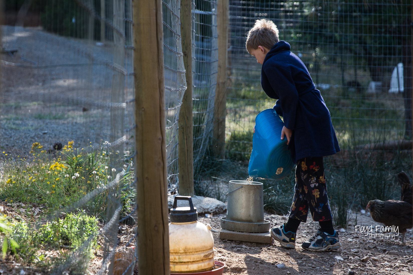 boy pouring food into chicken feeder |  Placerville Children Documentary Photographs