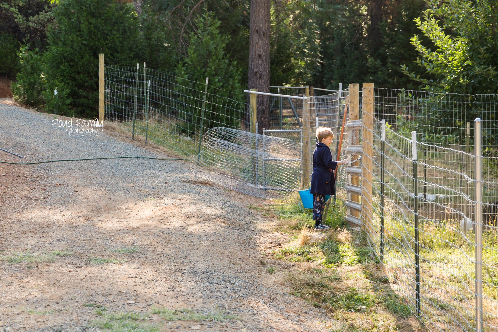 boy opening gate of chicken pin |  Placerville Children Documentary Photographs