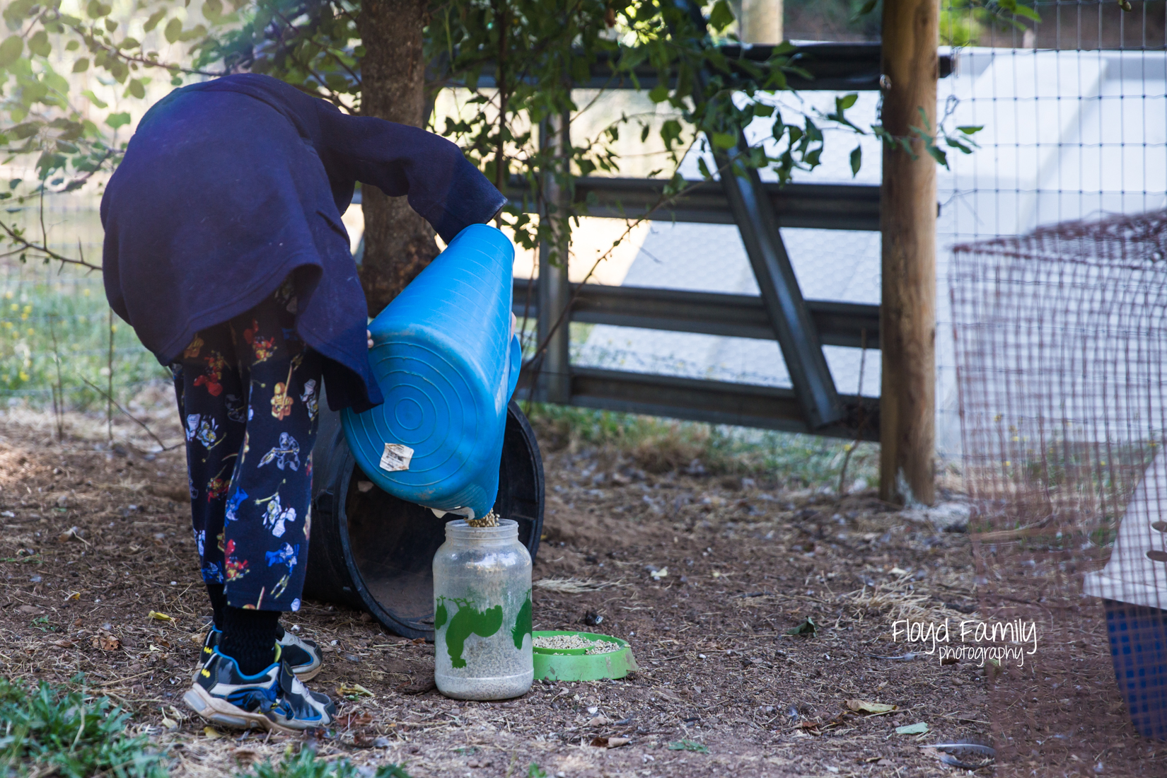 boy pouring chicken food into feeder |  Placerville Children Documentary Photographs