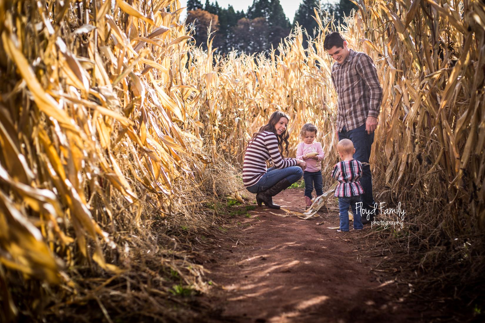 family walking through a corn maze in the fall