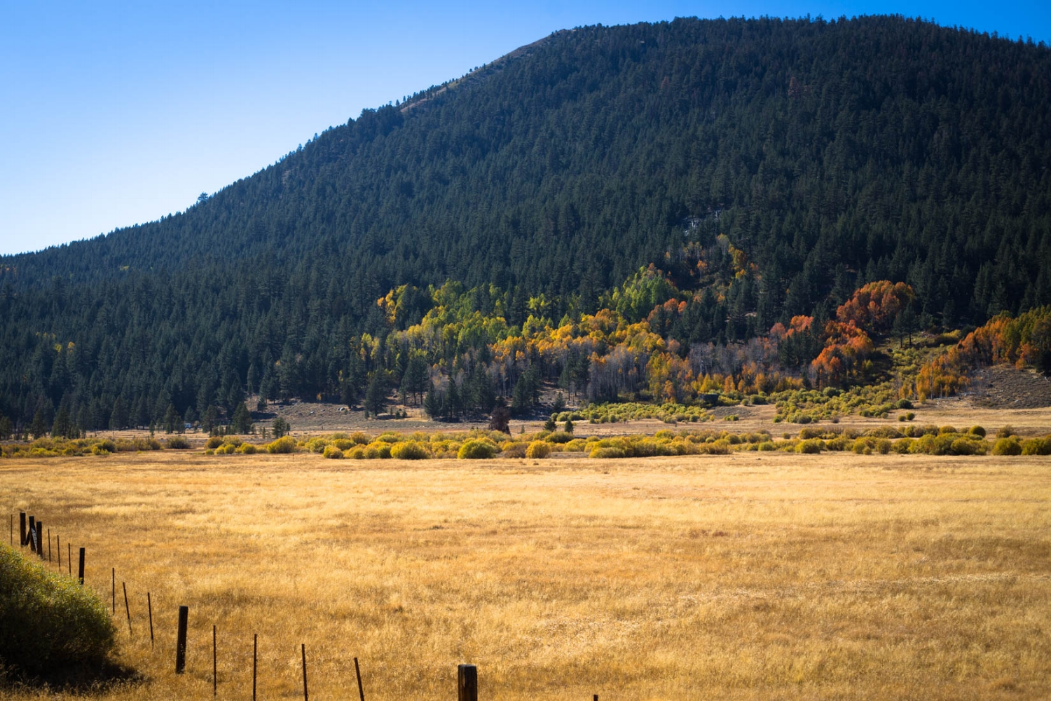 Landscape portrait of Hope Valley California on a fall day with pretty orange Aspen Trees | Lifestyle El Dorado Hills Photographer