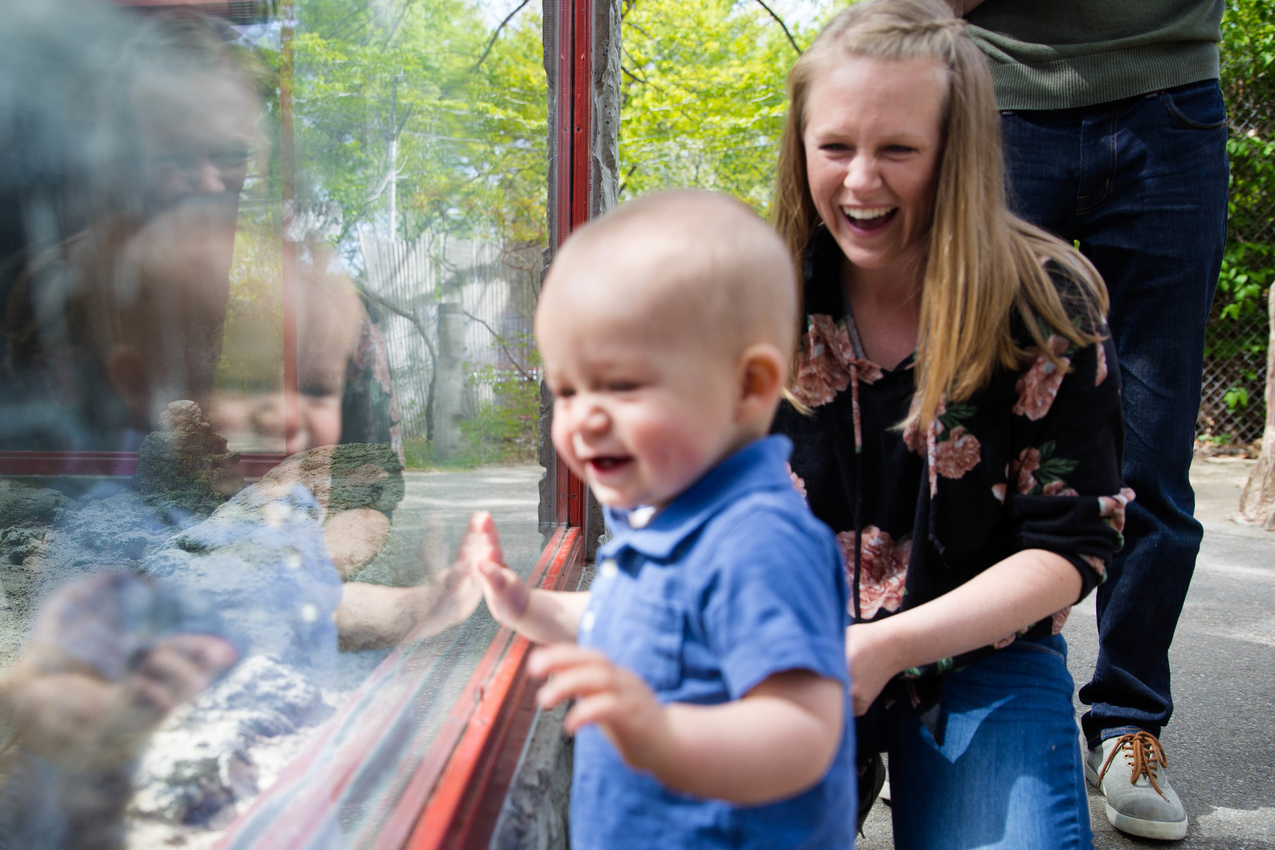 Little one year old boy laughing at the animal behind the glass at the Boise Zoo while mom laughs at his reaction. Dad standing behind.