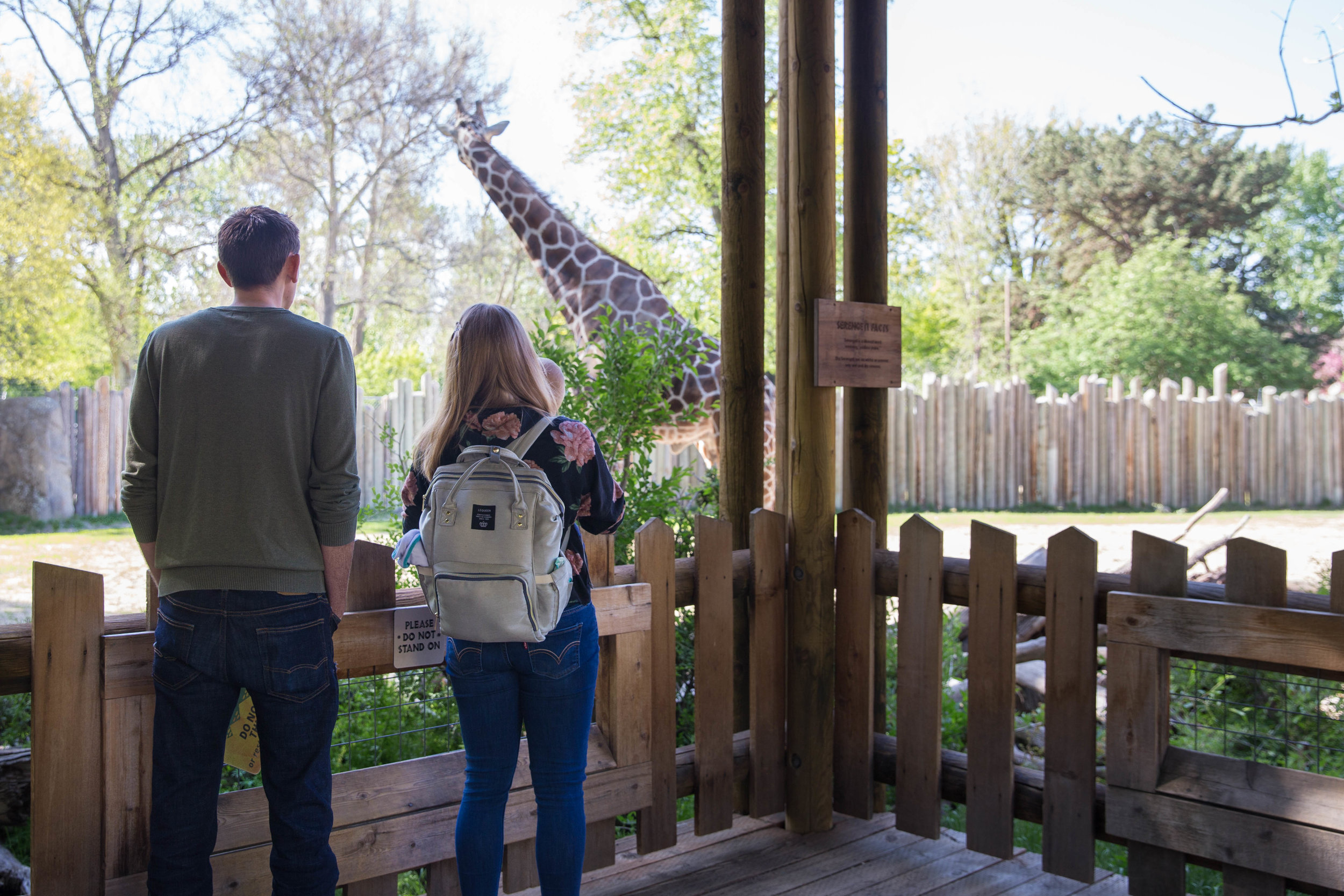 Mom and dad holding their one year old boy as they watch the giraffe walk on by at Zoo Boise.