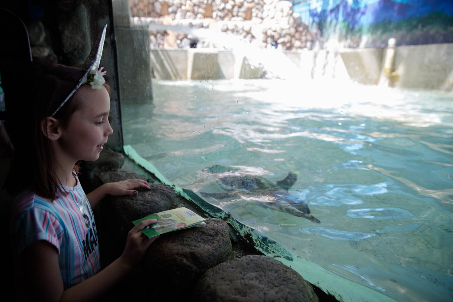 Little girl watching the penguins swim as they fill up the water tank at Zoo Boise.