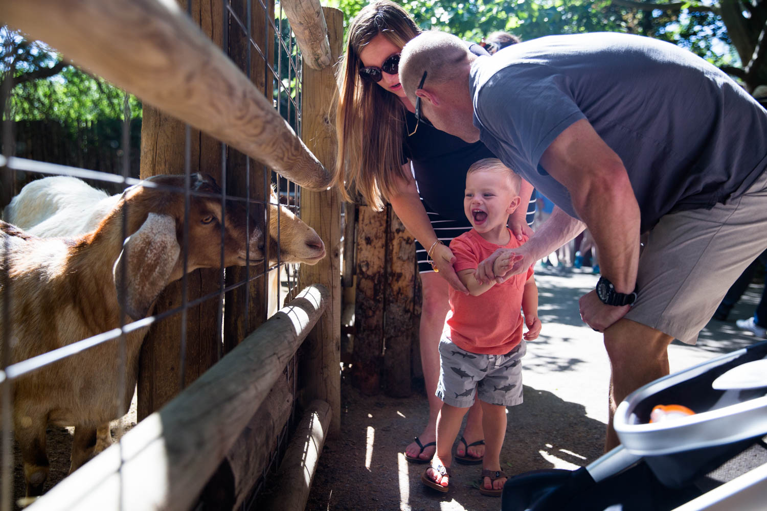 Small boy laughing as he feeds the goats in Zoo Boise, Parents hiking hand away.