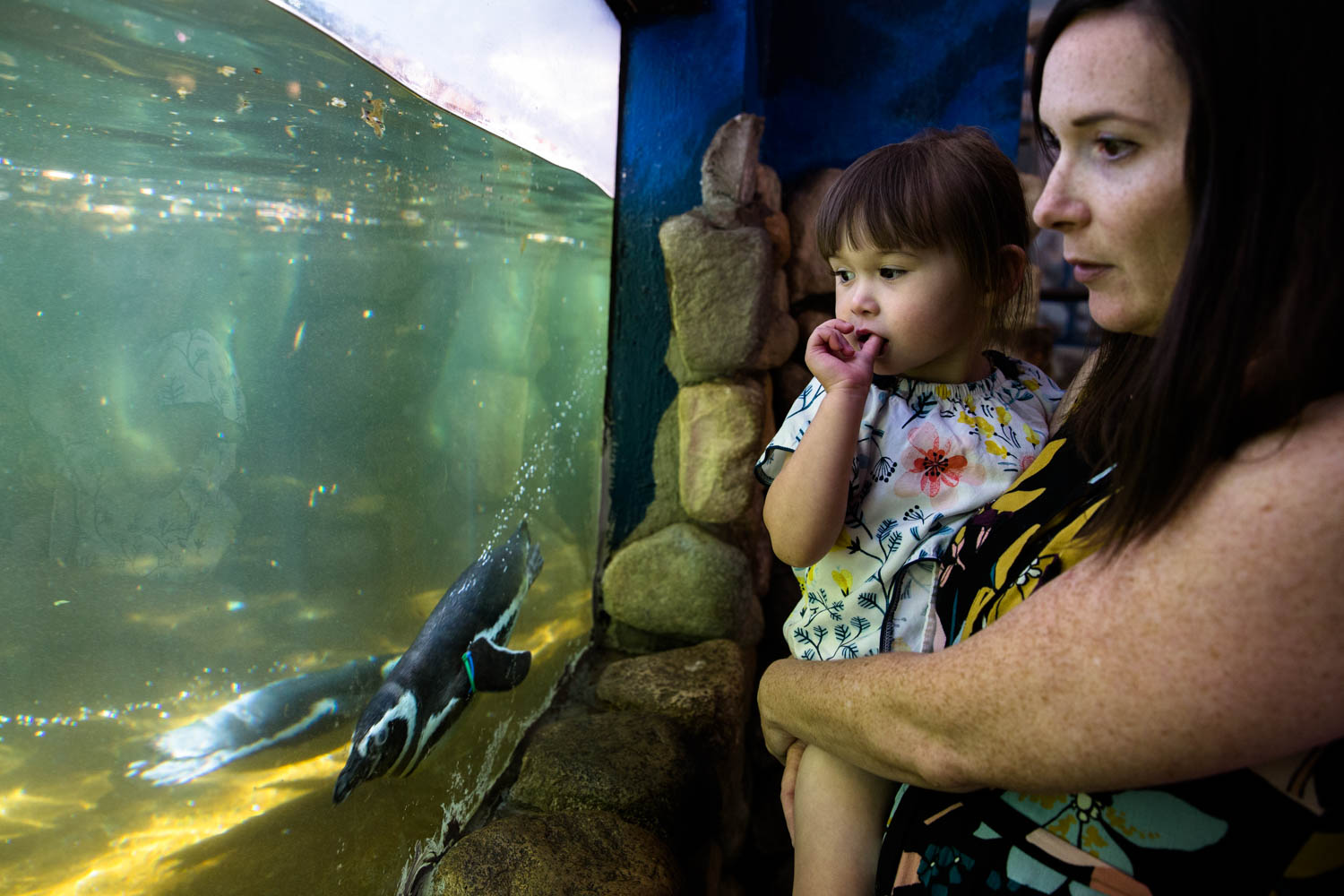 Mom holding daughter as they look at the penguins swimming in dirty water at Zoo Boise