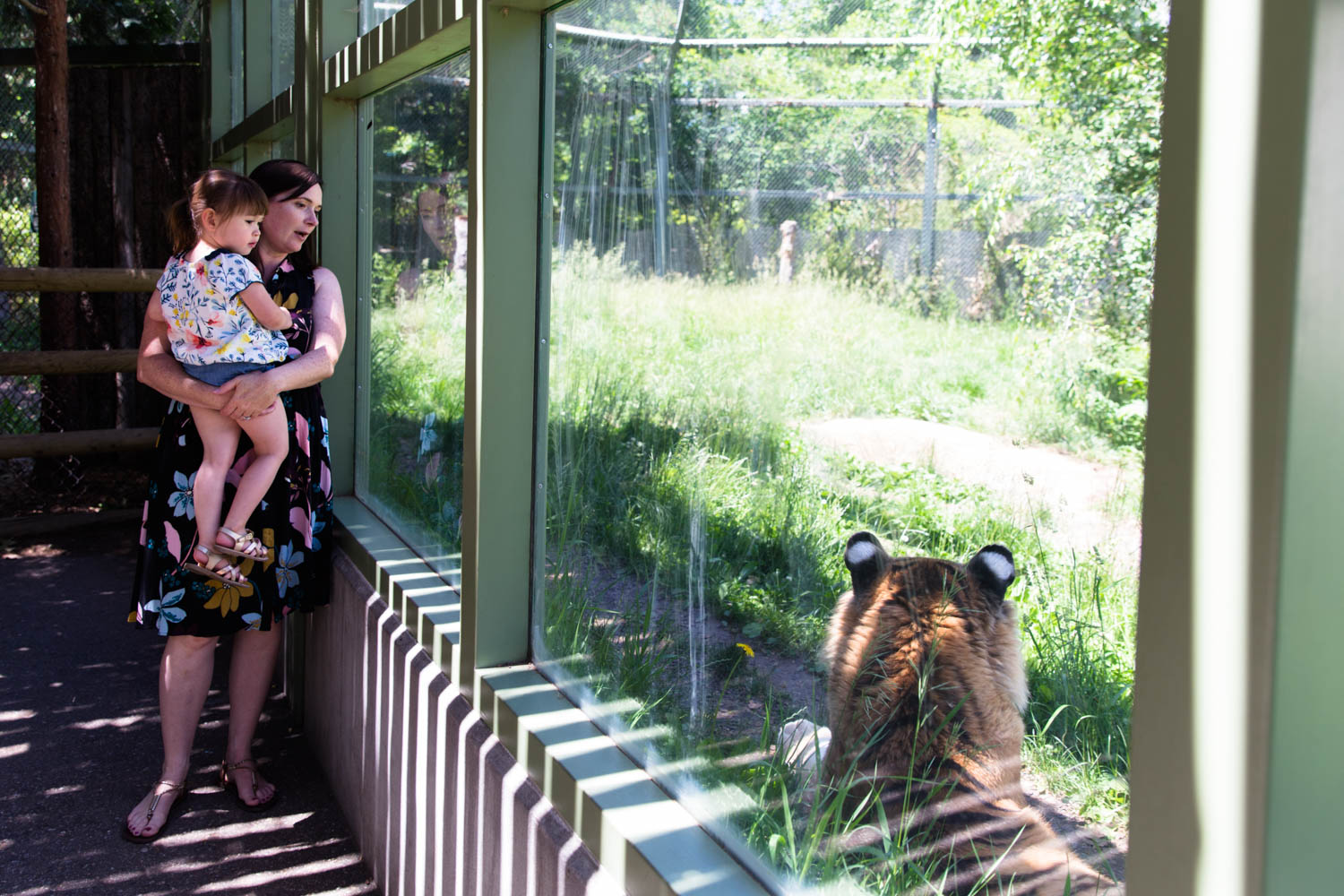 Mom holding daughter next to the glass overlooking the tiger enclosure at Zoo Boise