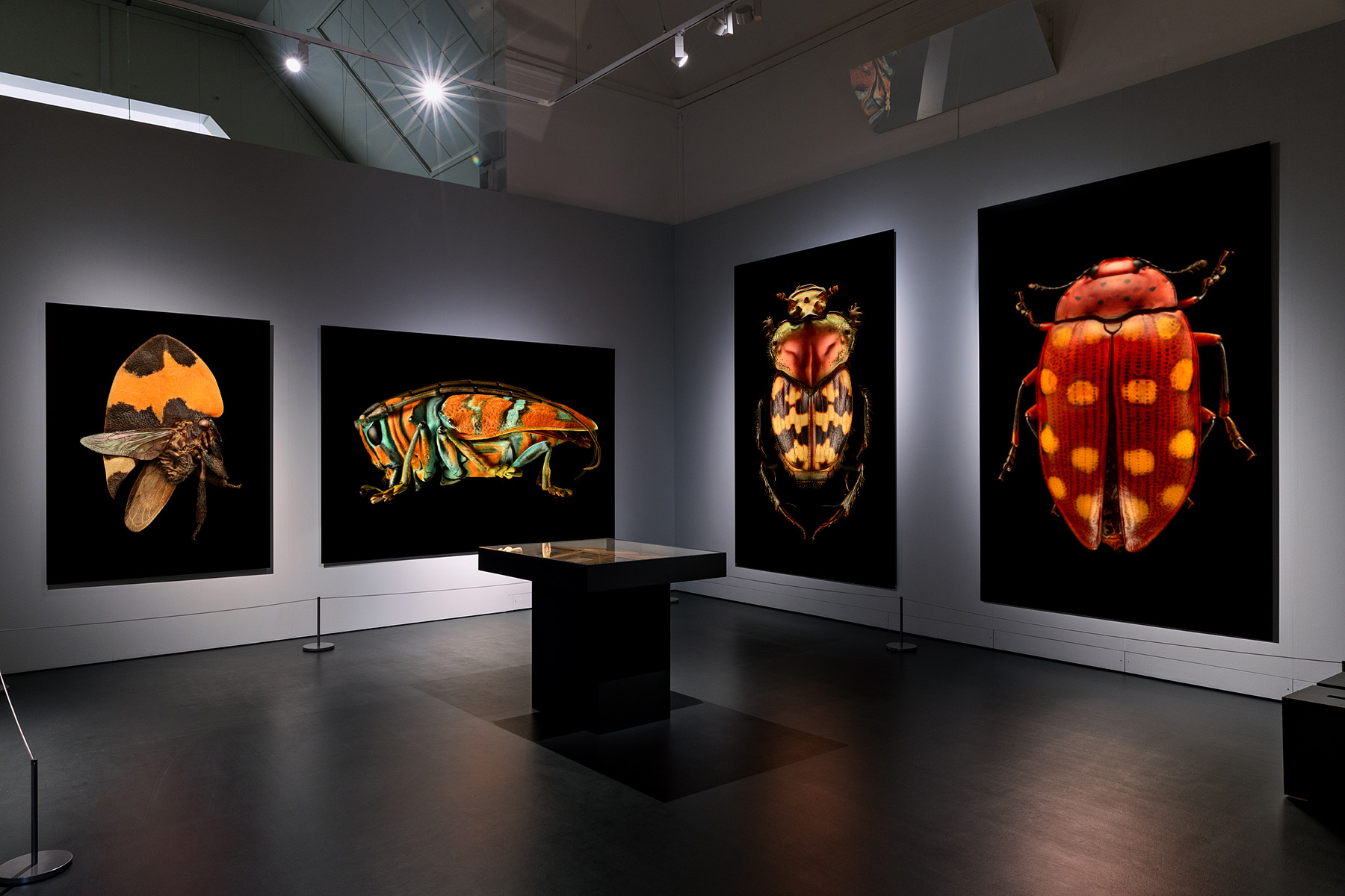 Display at the Naturhistorisches Museum Basel in Basel, Switzerland being shown through October 29, 2017.