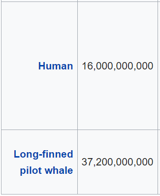 Species/Neurons - Screenshot from Wikipedia