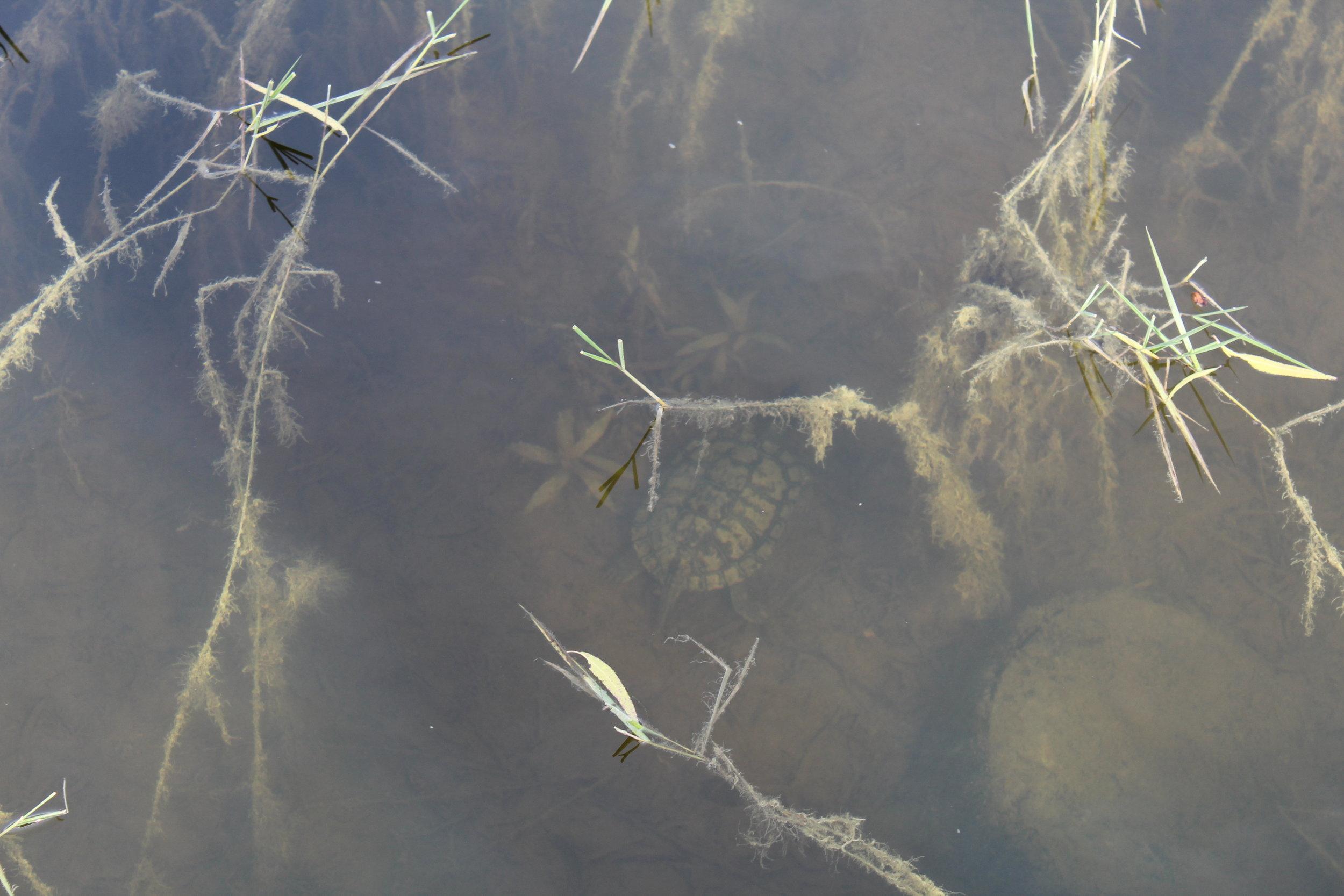 Turtle BOI